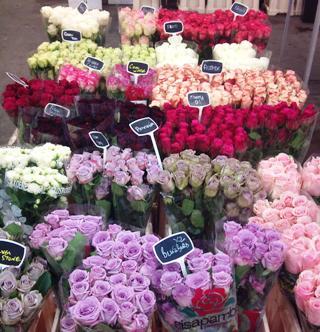 SEP_Hardcastle_Roses.jpg