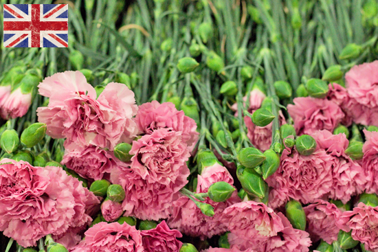 British Garden Pink for British Flowers Week at New Covent Garden Market