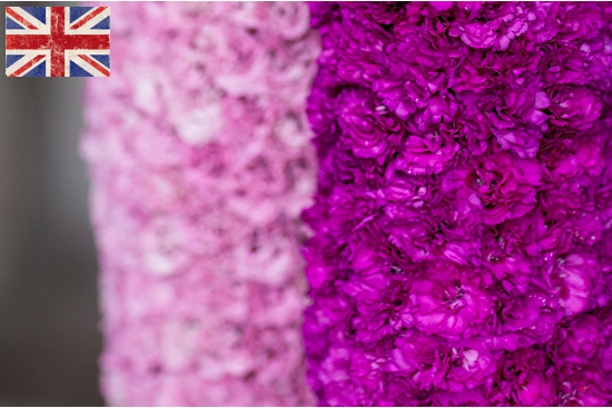 pink and purple British Garden Pink in a Simon Lycett design for British Flowers Week at New Covent Garden Market