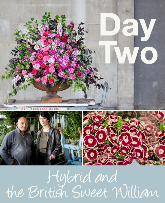 Day Two: Hybrid and the British Sweet William