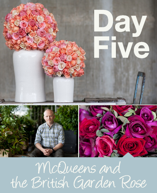 Day Five: McQueens and the British Garden Rose