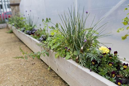 Lunch Bxd oasis farm planter