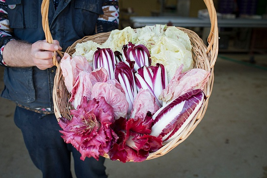 Basket of mixed radicchio
