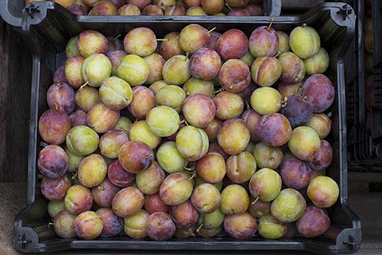 Opal plums.
