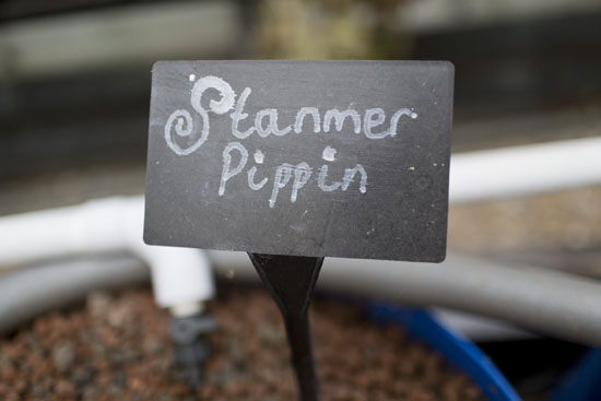 Stanmer Pippin sign at Plumpton College