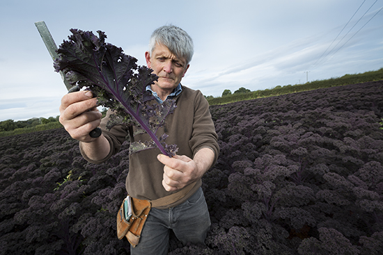 Chris Molyneaux inspecting purple kale