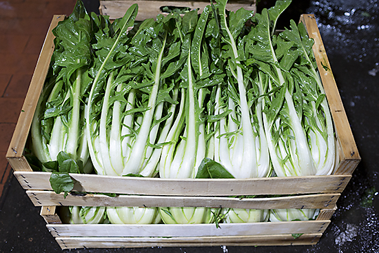 Boxes of puntarelle