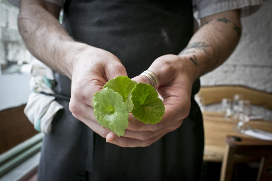 Chef holding herbs
