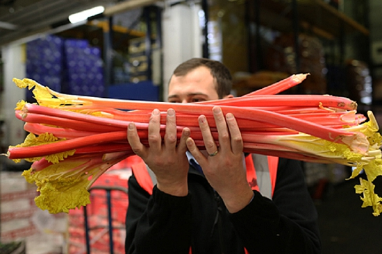 Forced Rhubarb at New Covent Garden Fruit and Vegetable Market - January 2015