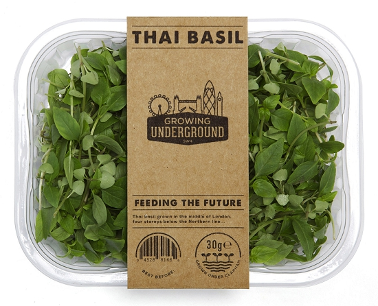 Growing underground produce - Thai Basil