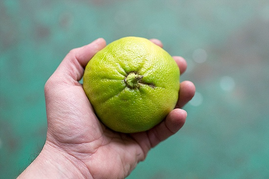 Bergamot at New Covent Garden Fruit & Vegetable Market - January 2016