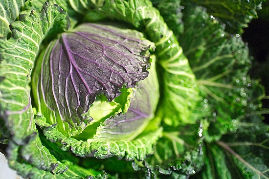 January King cabbage at New Covent Garden Fruit & Vegetable Market - January 2016
