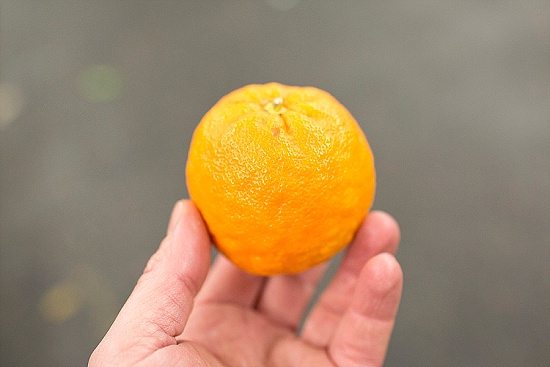 Seville orange at New Covent Garden Fruit & Vegetable Market - January 2016
