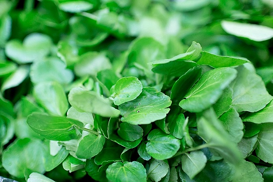 French watercress at New Covent Garden Fruit & Vegetable Market - January 2016