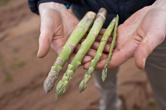 Asparagus grades