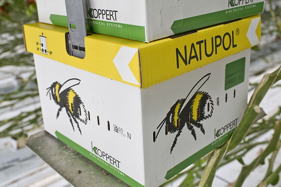 Imported bees at Nutbourne Nursery