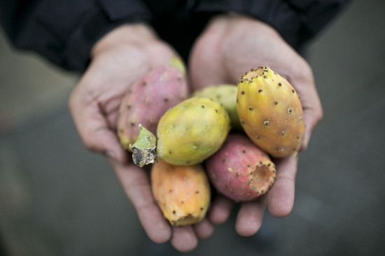 Prickly pears at New Covent Garden Fruit and Vegetable Market - August 2014