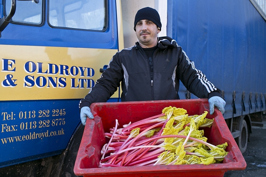 E. Oldroyd & Sons transporting forced rhubarb