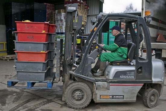 Unloading forced rhubarb