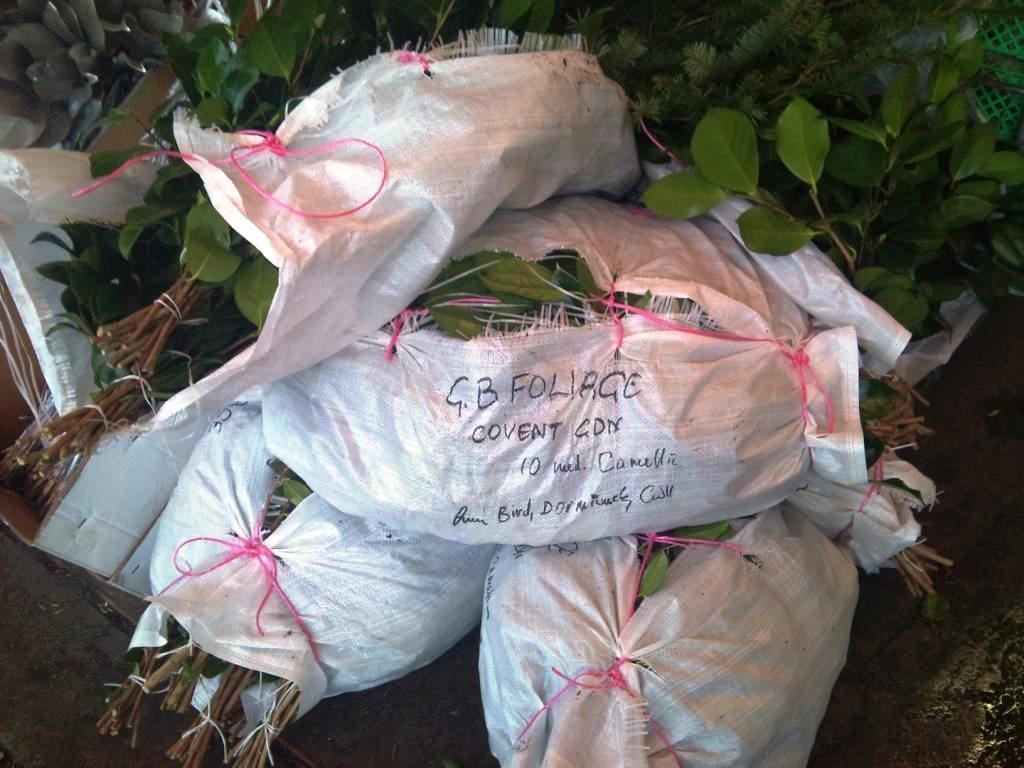 camellia-bags.jpg?mtime=20171003153520#asset:12594