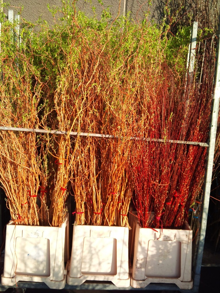 dogwoods-and-willows.jpg?mtime=20171003165921#asset:12797