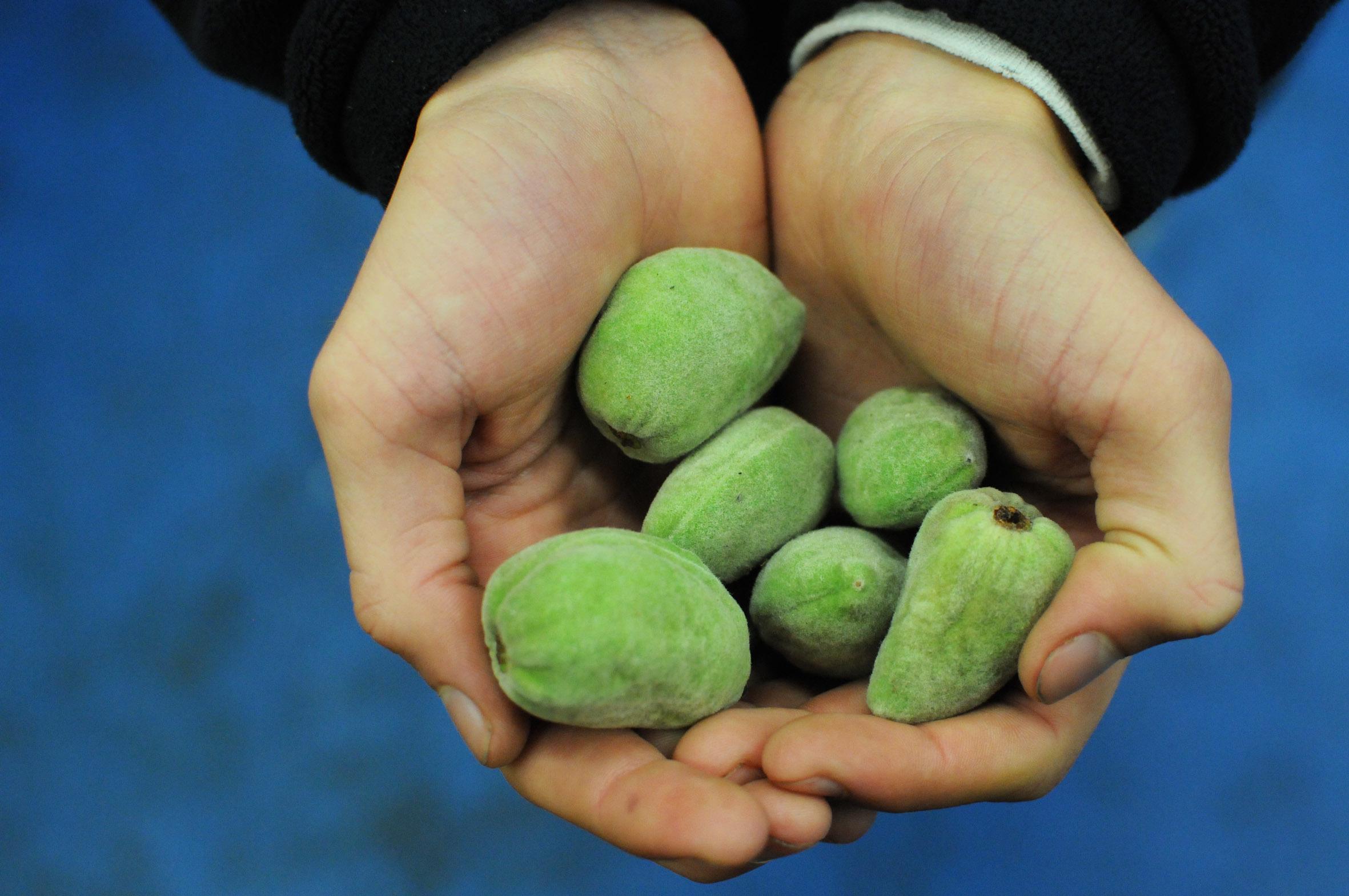 fresh-almonds.jpg?mtime=20170922135434#asset:11461