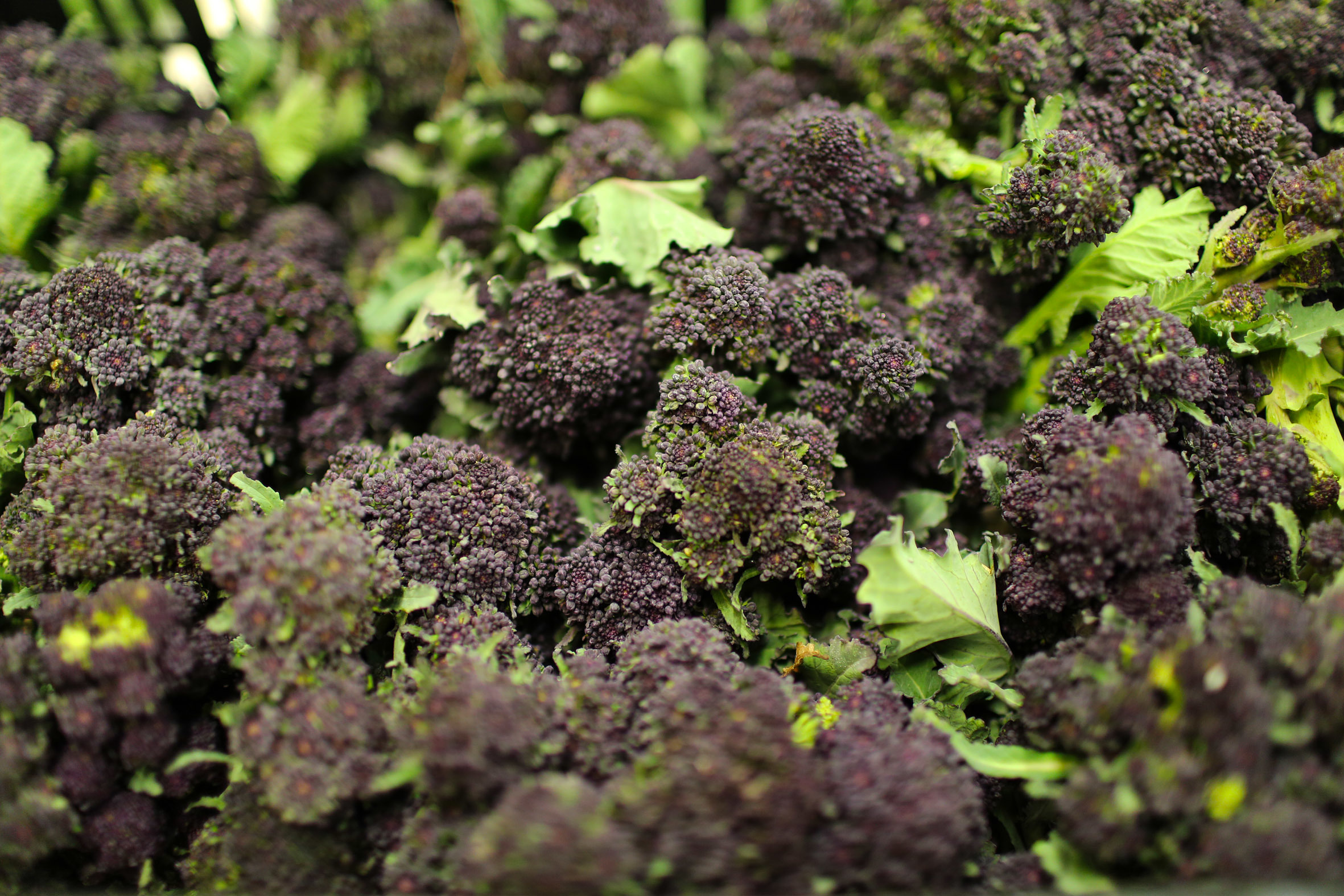 fruit-and-vegetable-market-report-february-2014-purple-sprouting.jpg?mtime=20170922113424#asset:11352