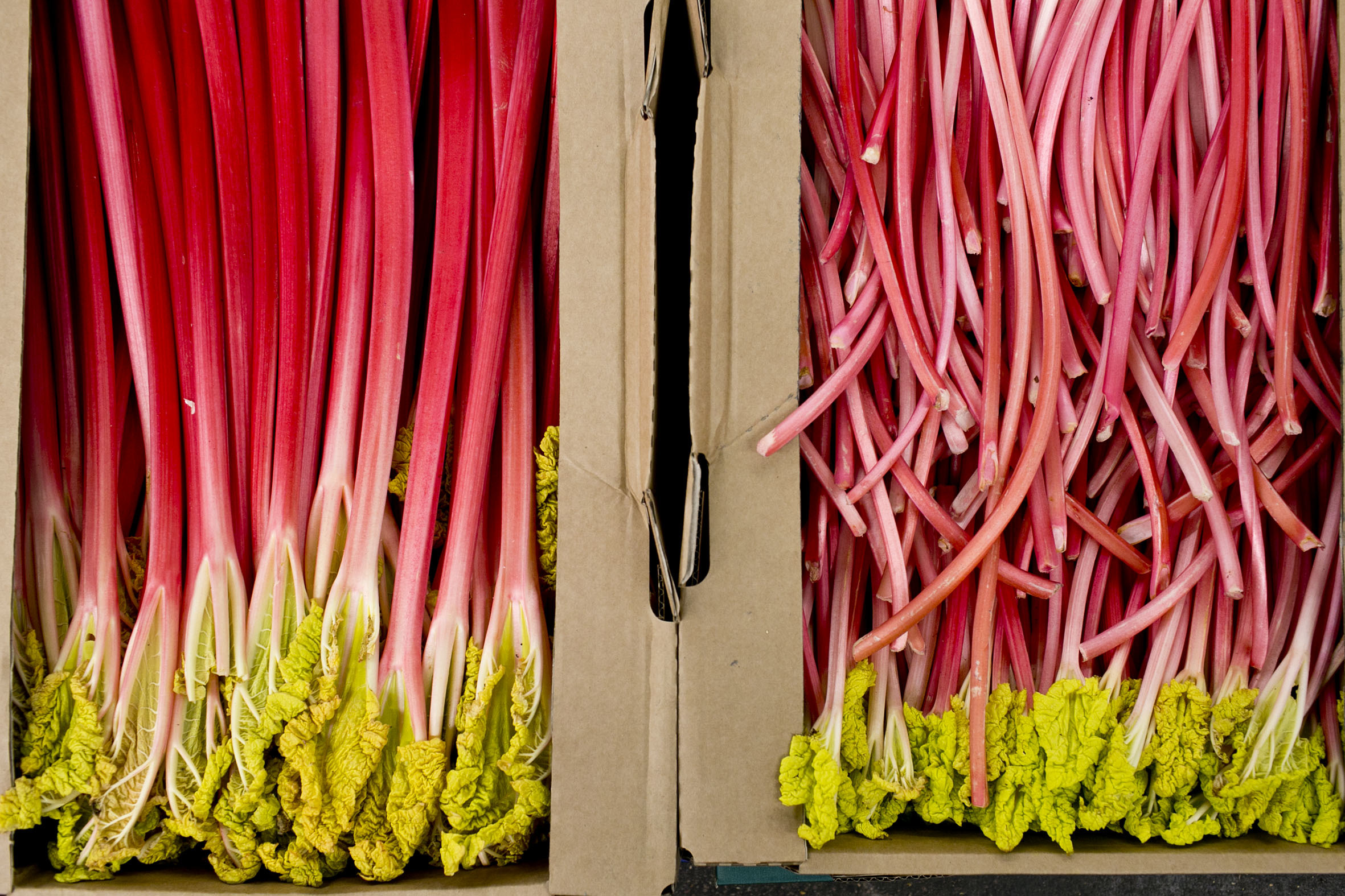 fruit-and-vegetable-market-report-february-2014-rhubarb.jpg?mtime=20170922113427#asset:11353