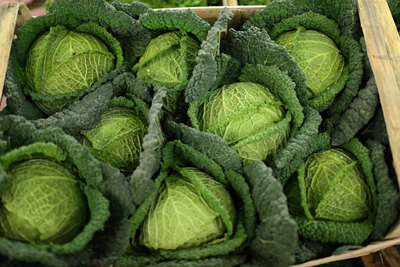 fruit-and-vegetable-market-report-january-2014-savoy-cabbage.jpg?mtime=20170922114122#asset:11377