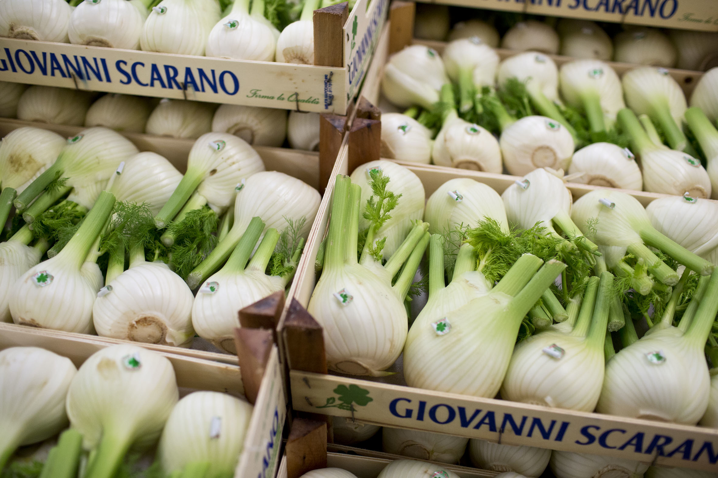 fruit-and-vegetable-market-report-march-2014-fennel.jpg?mtime=20170922112630#asset:11325