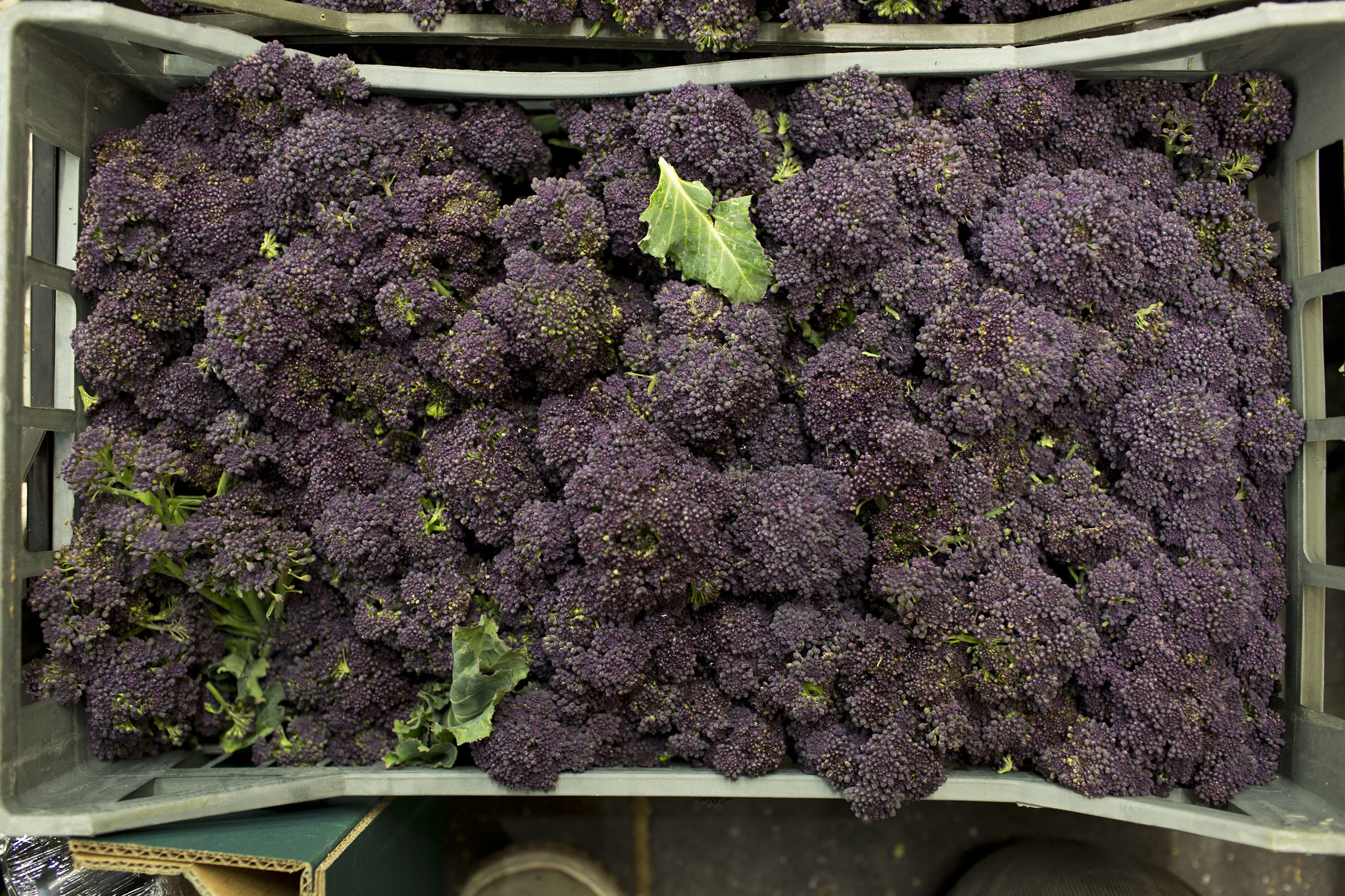 fruit-and-vegetable-market-report-march-2014-purple-sprouting.jpg?mtime=20170922112644#asset:11331