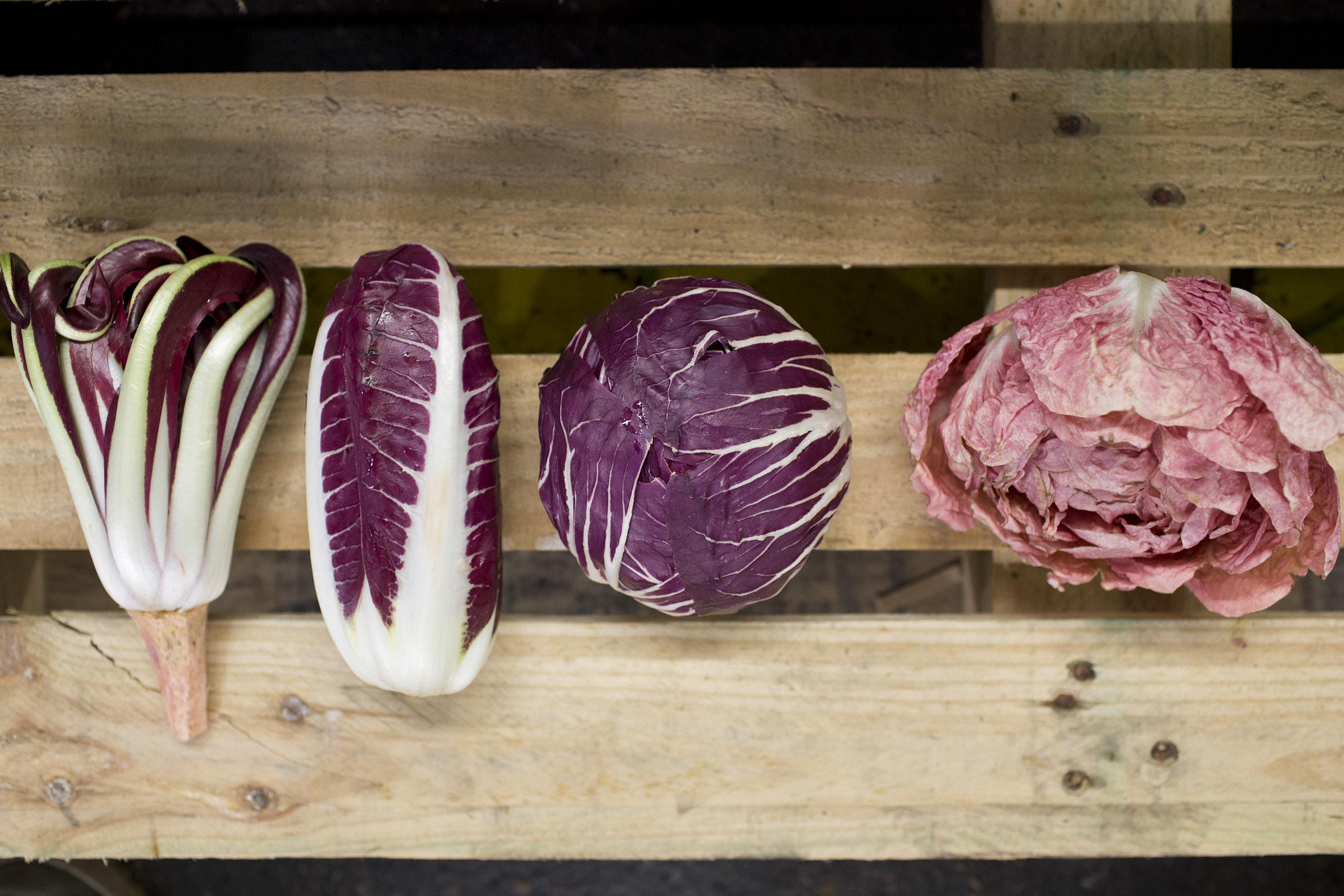 fruit-and-vegetable-market-report-march-2014-radicchio.jpg?mtime=20170922112646#asset:11332