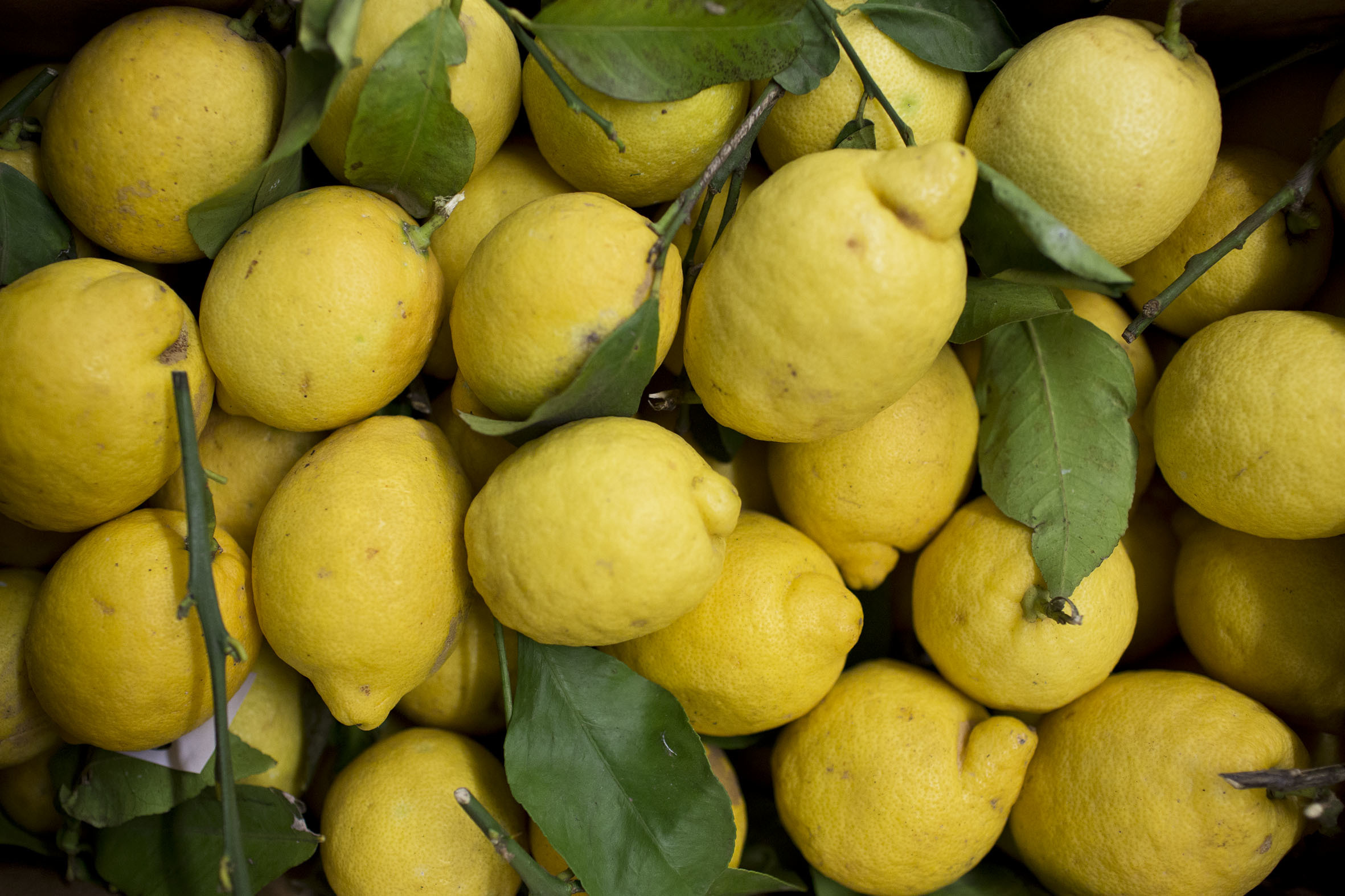 fruit-and-vegetable-market-report-march-2014-unwaxed-lemons.jpg?mtime=20170922112651#asset:11334
