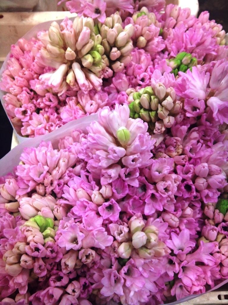 hyacinth.jpg?mtime=20171003153509#asset:12590
