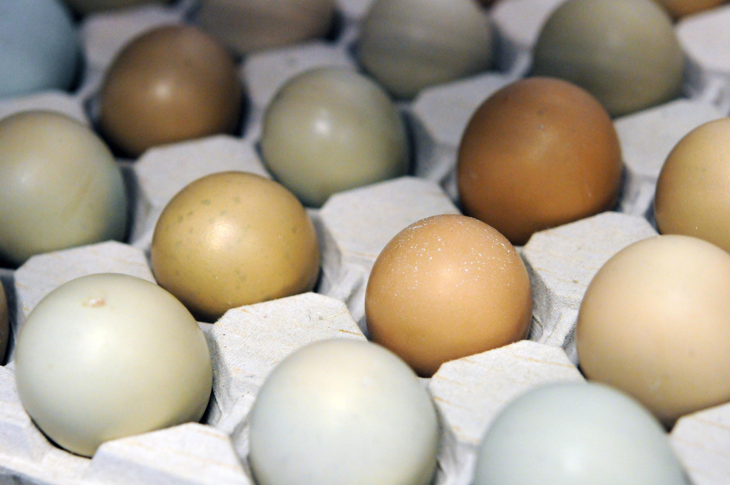 pheasant-eggs.jpg?mtime=20170922135449#asset:11467