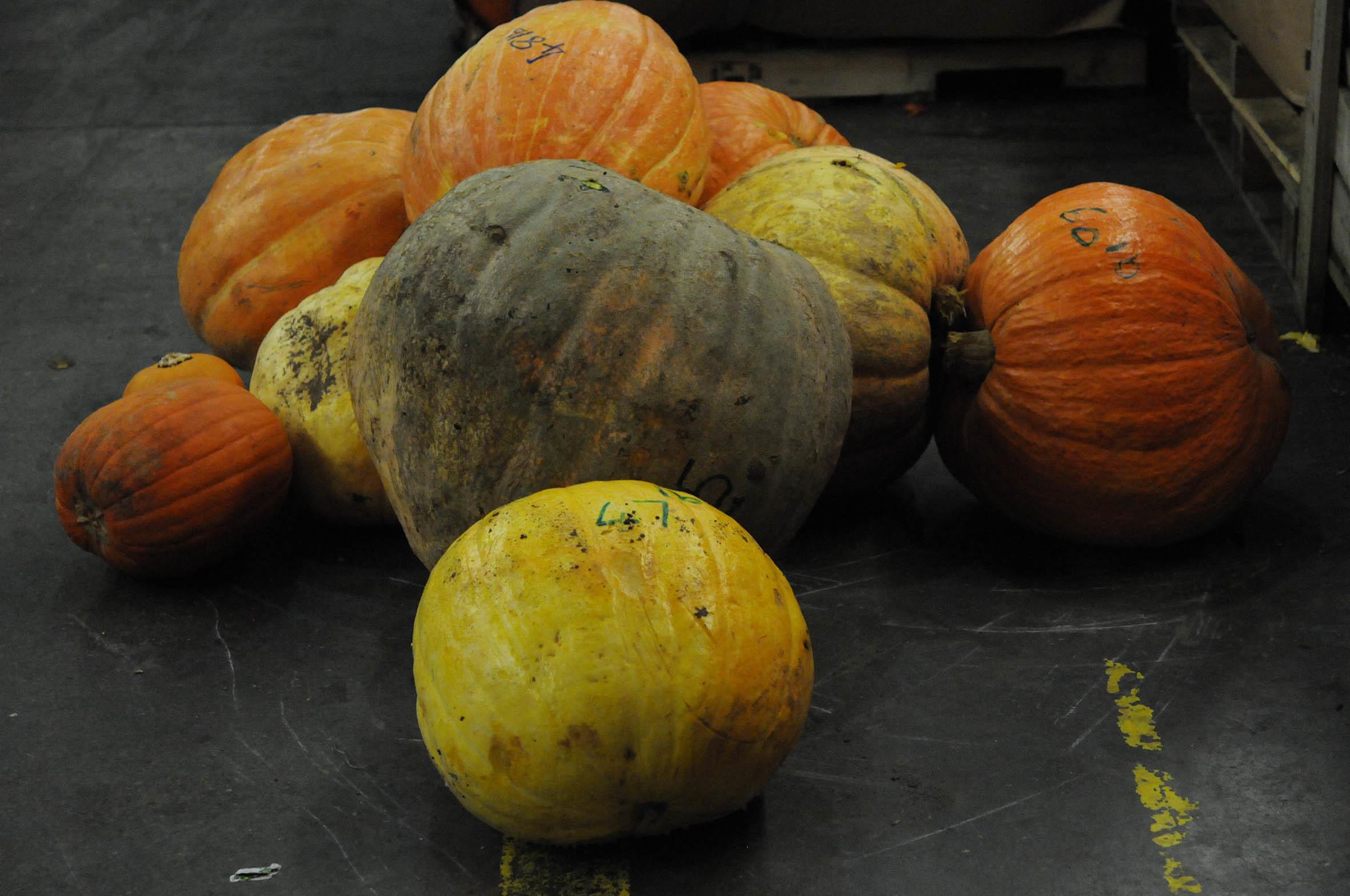 pumpkin_pile.jpg?mtime=20170922115350#asset:11404