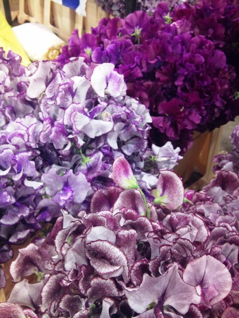 purple-sweet-peas.jpg?mtime=20171003164226#asset:12747