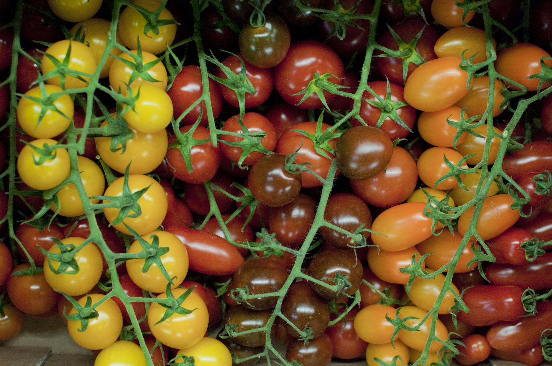 tomatoes_170922_121325.jpg?mtime=20170922121325#asset:11439