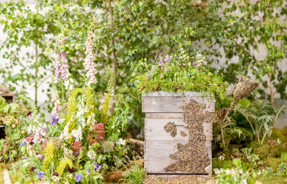 British Flowers Week competition launch