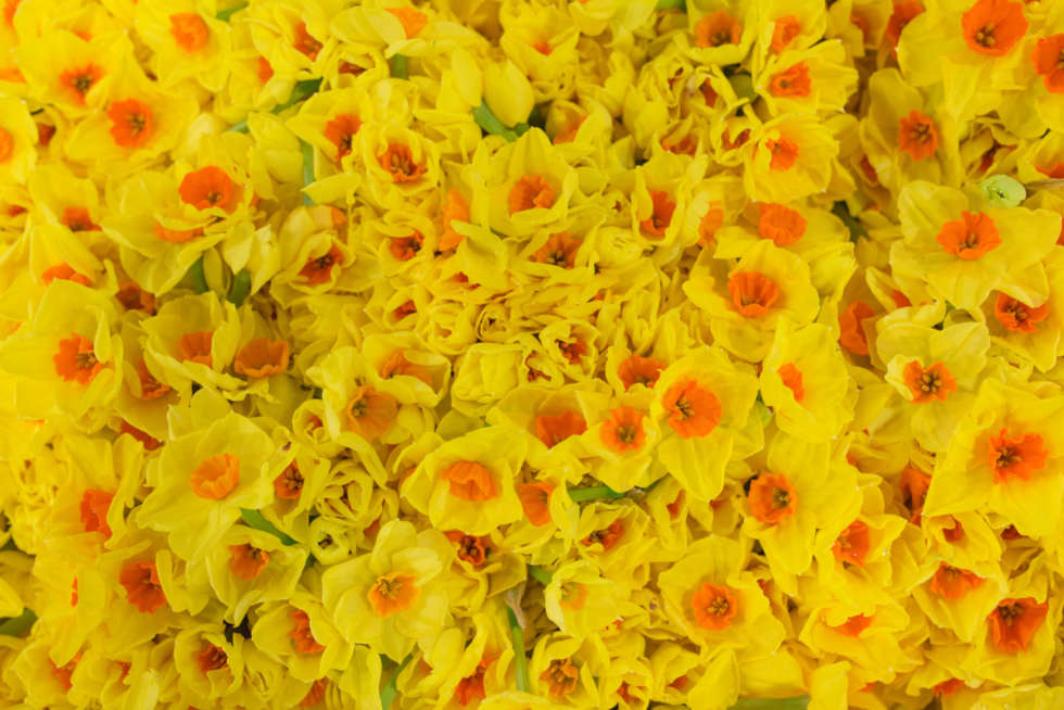 March's Flower Market Report