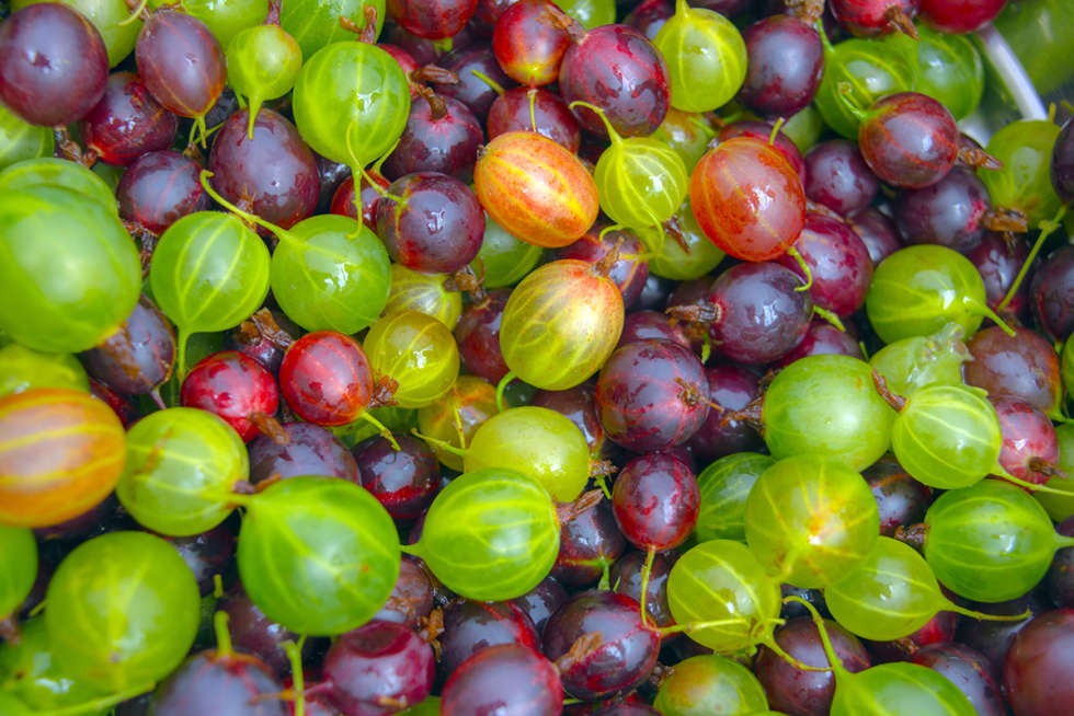 A chef's guide to gooseberries