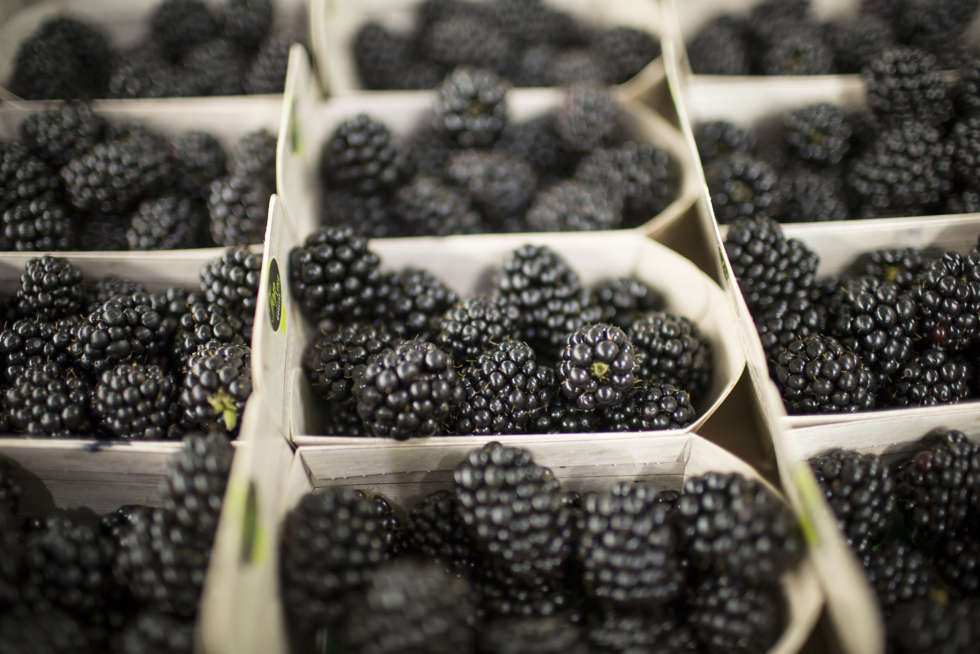 July's Fruit and Veg Market Report