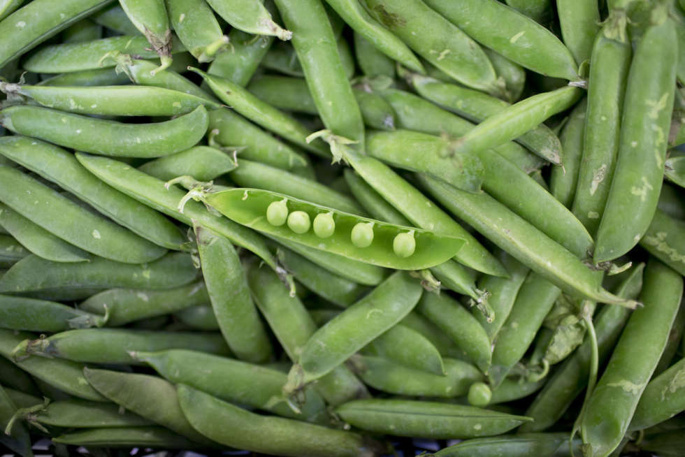 June's Fruit and Veg Report