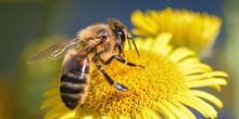 Bee-2603360_960_720_normal