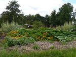 Vindertuin_weelde_aug_2014_medium