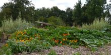 Vindertuin_weelde_aug_2014_normal