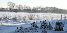 Winter_2012_032_normal