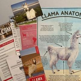 Adopt a Llama Gift Box