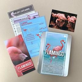 Adopt a Flamingo Gift Box