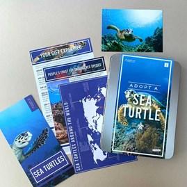 Adopt a Sea Turtle Gift Box